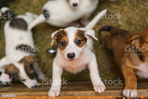 Little puppies in the picture id543600370?b=1&k=6&m=543600370&s=612x612&h=gwswzavpn0jupvp6aa eh6sxraeafih1pfwed2zg8be=