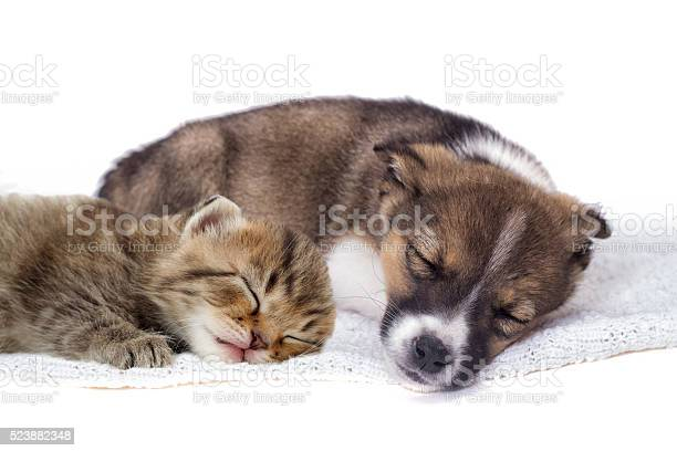 Little puppy and kitten picture id523882348?b=1&k=6&m=523882348&s=612x612&h=9pakgzaalwmkcpkqa5vxupztu34b5djlsbta3134q0i=