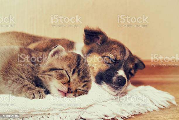 Little puppy and kitten picture id523885284?b=1&k=6&m=523885284&s=612x612&h=wb64py29zci zfokicrd5h2qor1ftsiralofpr6gd7m=