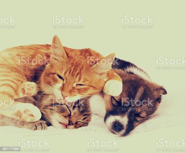 Little puppy and kitten picture id531177630?b=1&k=6&m=531177630&s=612x612&h=z1oyrequjomweuj8dpktq99e80ymzytbupvjcpfwmne=