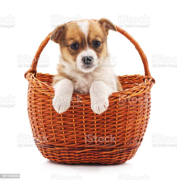 Little puppy in a basket picture id941066590?b=1&k=6&m=941066590&s=612x612&h=bv7fpyah1s3t6hf pdyqzsvm cgr6 0mlsy8unmkkyi=