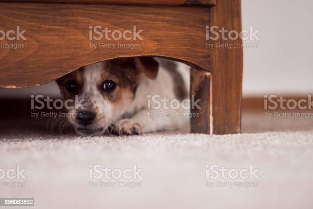 Little puppy is hiding under cupboard picture id696063892?b=1&k=6&m=696063892&s=612x612&h=oq2pyqnhtrefeuoq3dlx1lnoywqxhkrvbqwac03fbdy=