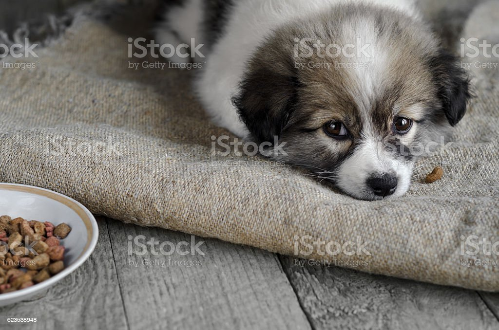 little puppy is lying on the sacking, next to a stock photo
