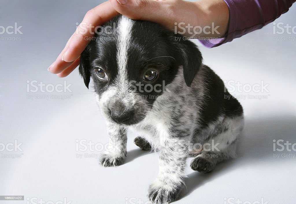 Little puppy royalty-free stock photo