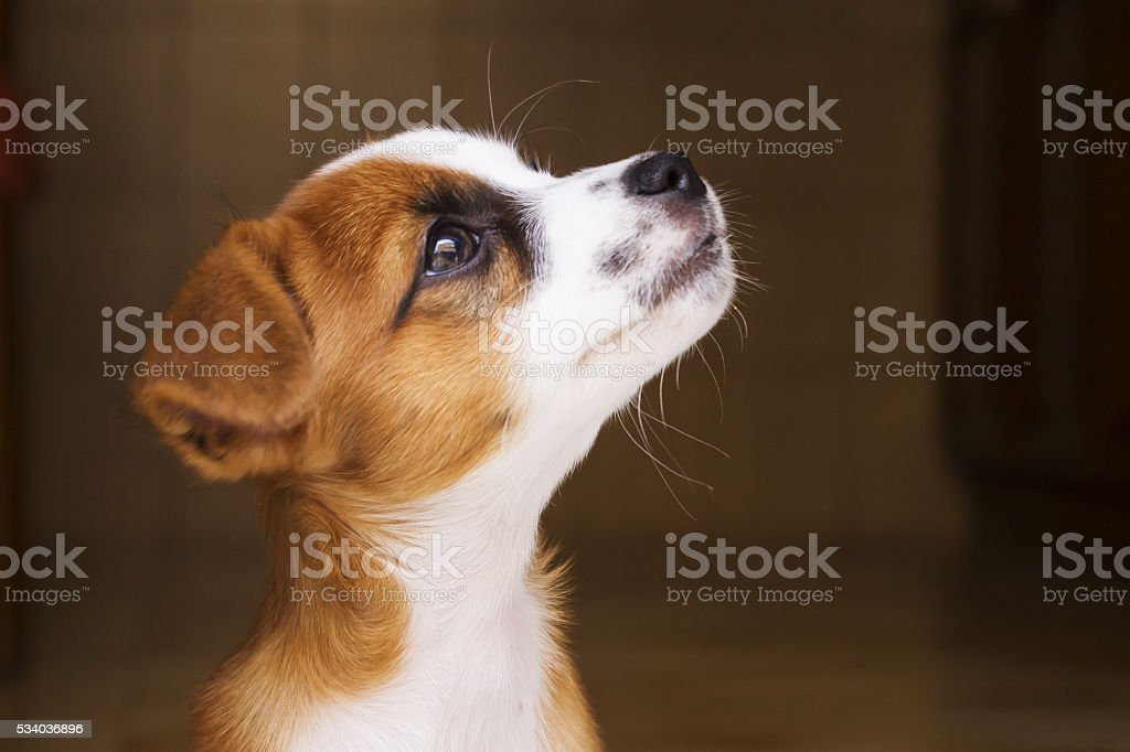 little puppy stock photo
