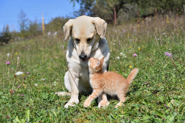 A little pussy kisses a big dog like her mother stock photo