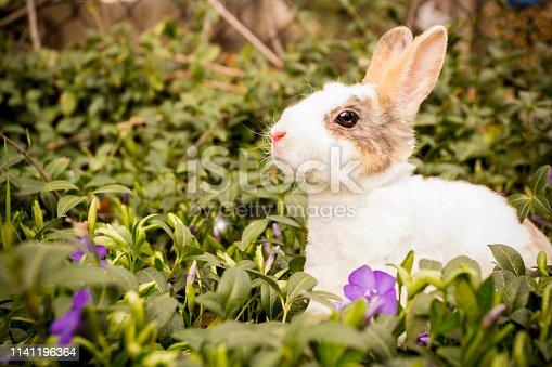 istock Little rabbit in the grass. 1141196364