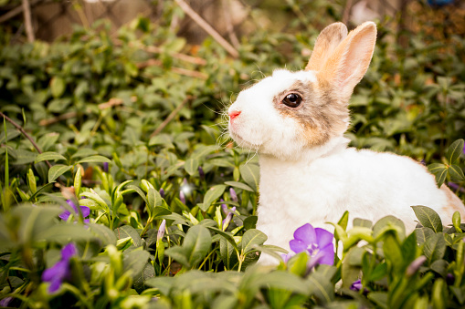 istock Little rabbit in the grass. 1141196364