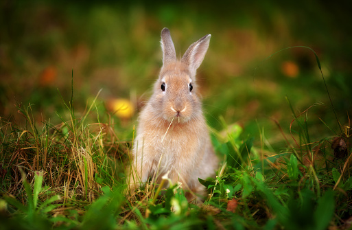 istock little rabbit in the grass 536954905