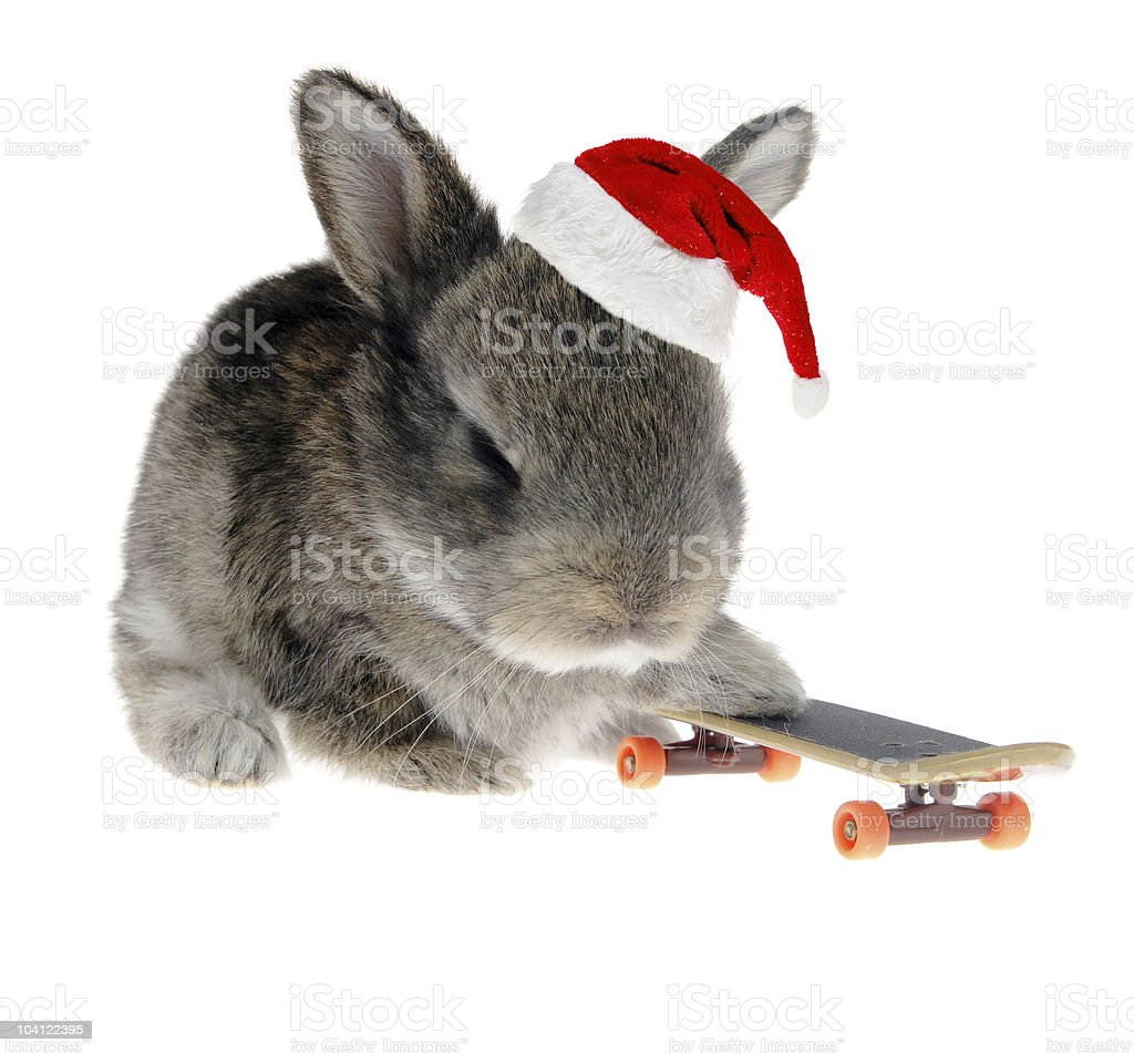 Little rabbit on a skateboard in Santa Claus hat royalty-free stock photo