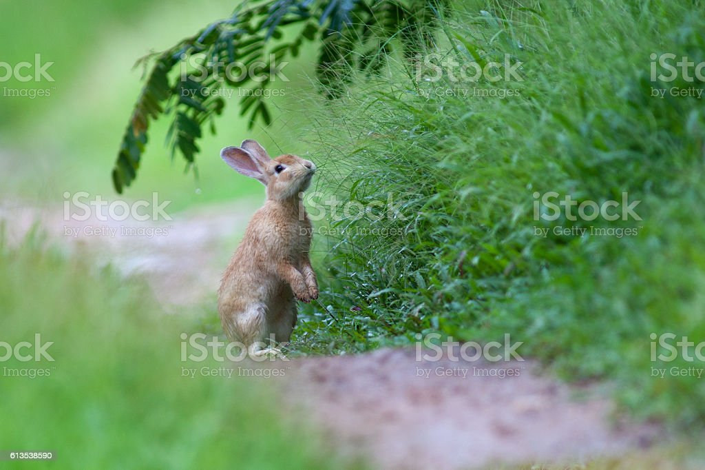 Little rabbit on green grass in summer day stock photo