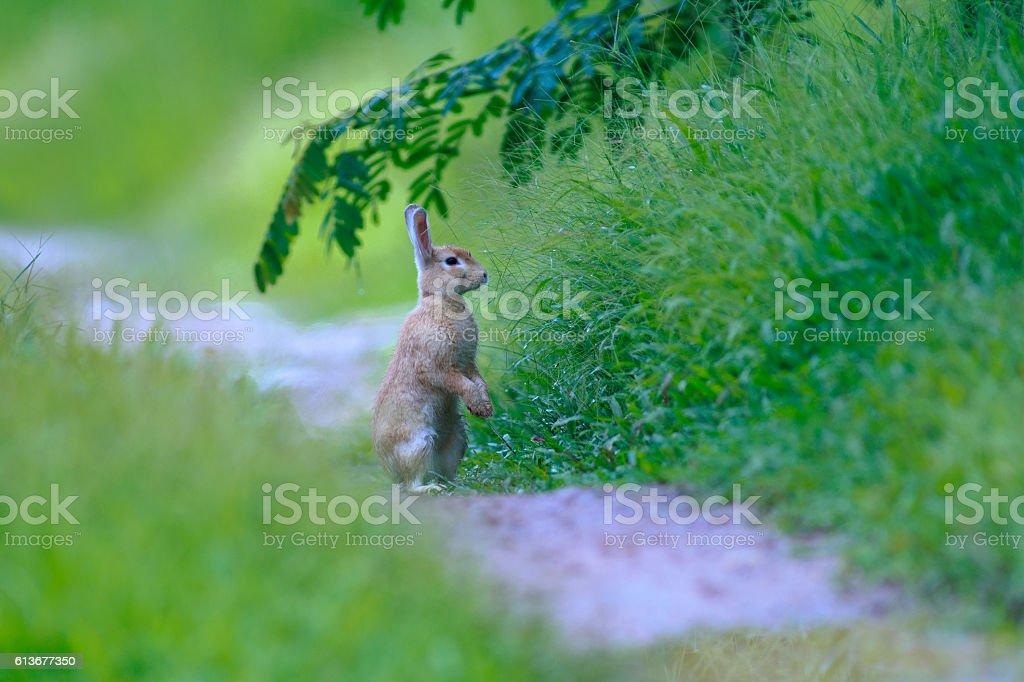Little rabbit on green grass in summer day stock photo