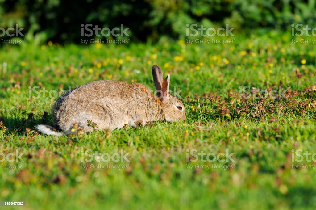little rabbit on green grass foto de stock royalty-free