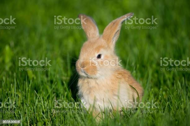 Little rabbit picture id955836656?b=1&k=6&m=955836656&s=612x612&h=stjcjn2yrq n zwycexswrhq8sxdqo2sm268y1hxuzc=
