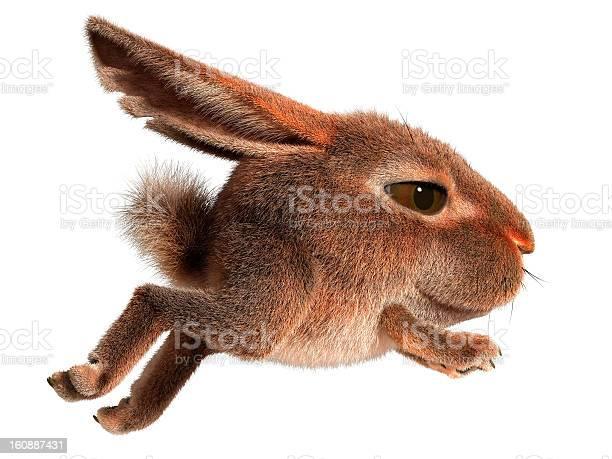 Little rabbit runs picture id160887431?b=1&k=6&m=160887431&s=612x612&h=eqyp bkdmfsjuraj7g9ztqrkjfnmvnr2wqddehqutqe=
