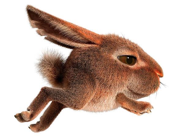Little rabbit runs picture id160887431?b=1&k=6&m=160887431&s=612x612&w=0&h=rkpbremrbbegijn1n jadjmms jy4n1a02cy3o8cbm4=