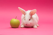 little rabbit with the apple on a pink background\