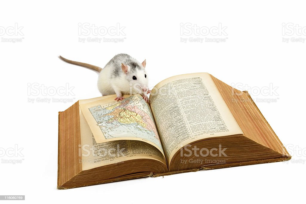 Little rat reading the book royalty-free stock photo