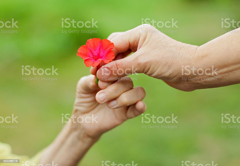 Little red flower stock photo