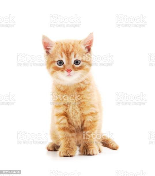 Little red kitten picture id1223264720?b=1&k=6&m=1223264720&s=612x612&h=ppjwm apgwb2ulkgntyvh1tiqbgys4ayye81mv68wz8=