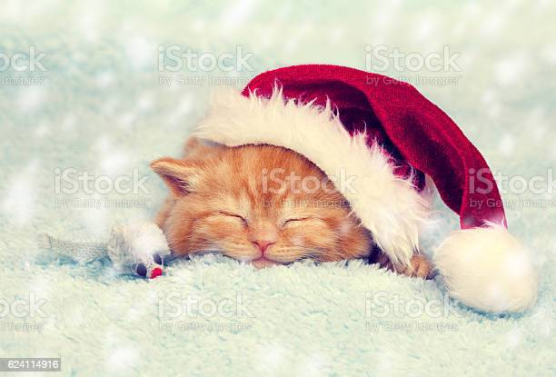 Little red kitten wearing santa hat sleeping on a blanket picture id624114916?b=1&k=6&m=624114916&s=612x612&h=q2gk8sseobv9n fjavk5vwdwdxvqoy7x6 z4feyb no=