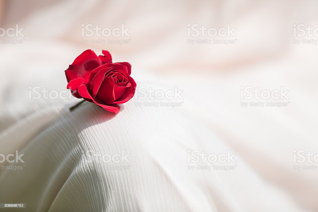 Little Red rose on the wedding dress stock photo