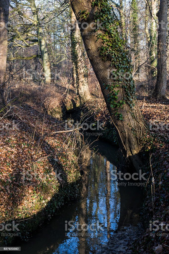 Little river in the forest stock photo