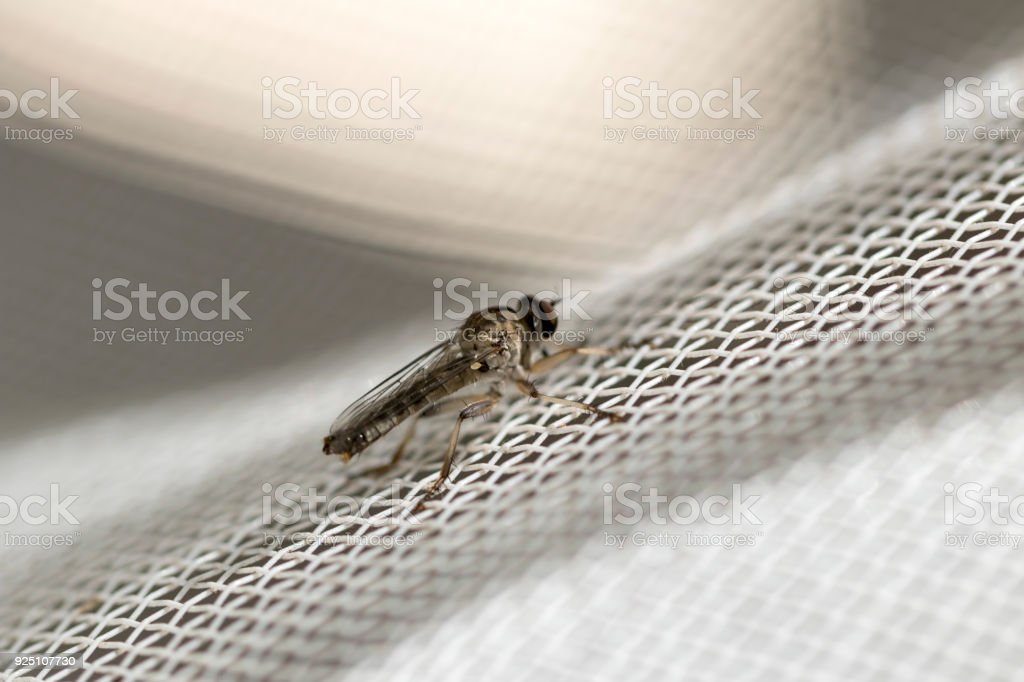 Little robber fly landed on a white plastic net. Macro photography. Close-up image. stock photo