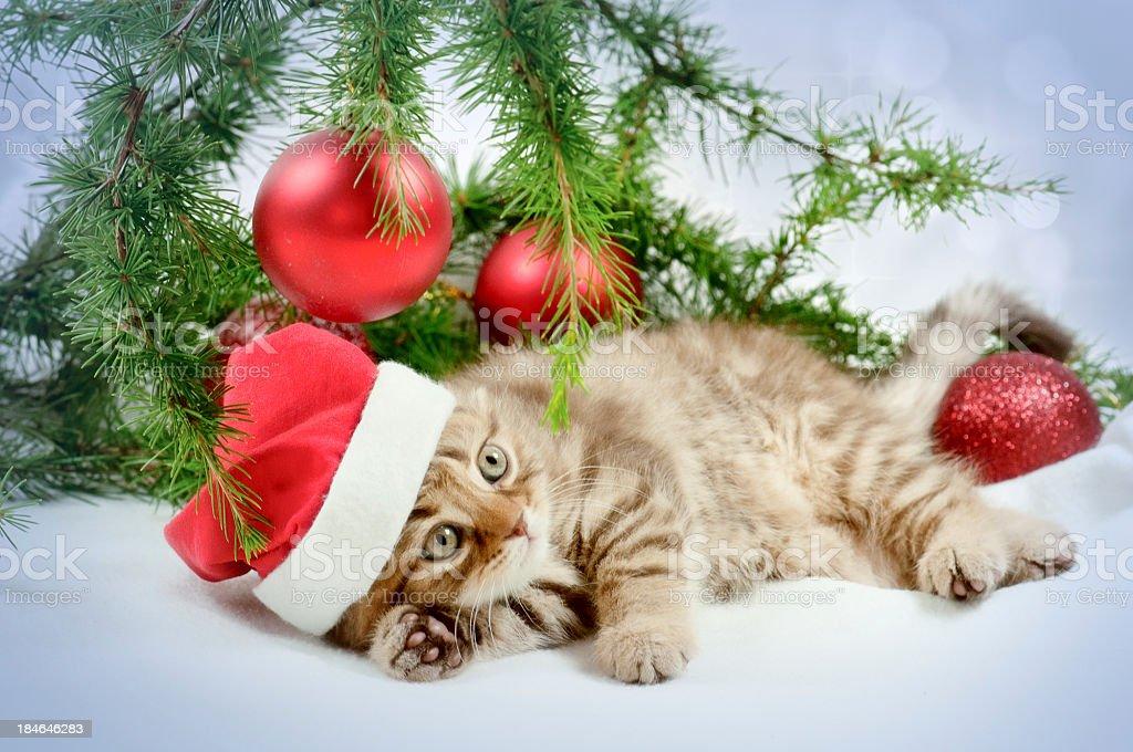 little Santa royalty-free stock photo
