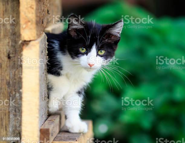 Little scared homeless kitten peeps out of hiding on the street picture id915695996?b=1&k=6&m=915695996&s=612x612&h=dtojje3an6pd nf334zestwc3n6cofi88yx6wir4gna=