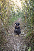 Portrait of dog in the cornfield, Dog, Happiness, Outdoors, Agricultural Field