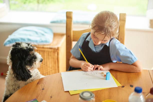 menininha desenhando seu cão de estimação - cachorro desenho - fotografias e filmes do acervo