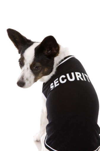 Little Security Dog