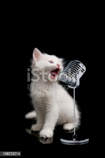 beautiful cat is sing a song