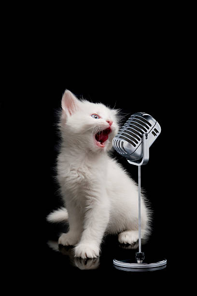 Little singer picture id108223214?b=1&k=6&m=108223214&s=612x612&w=0&h=qcl kdbexodisy8esndyetubrac9hxvhgu8ocdagljm=