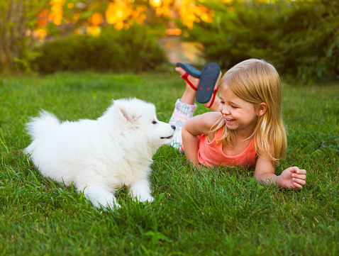 Little smiling girl playing with Samoyed puppy in garden