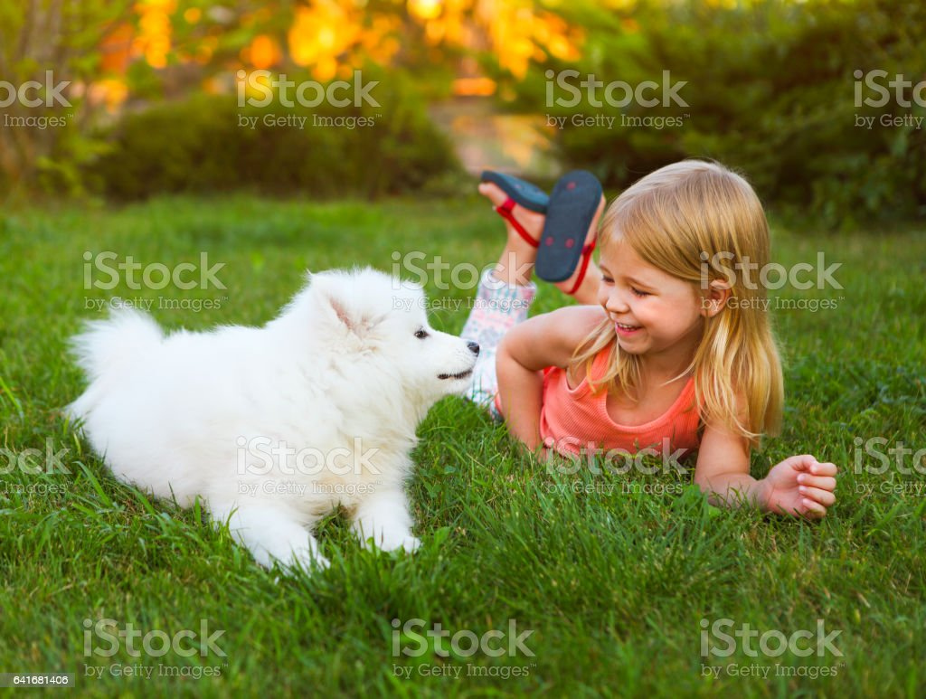 Little smiling girl playing with Samoyed puppy in garden stock photo