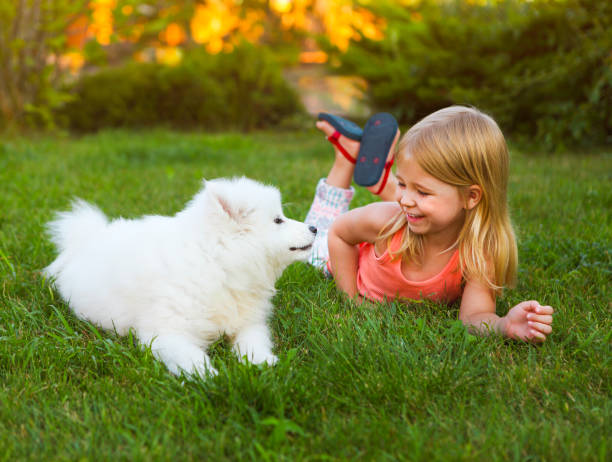 little smiling girl playing with samoyed puppy in garden - allevatore foto e immagini stock