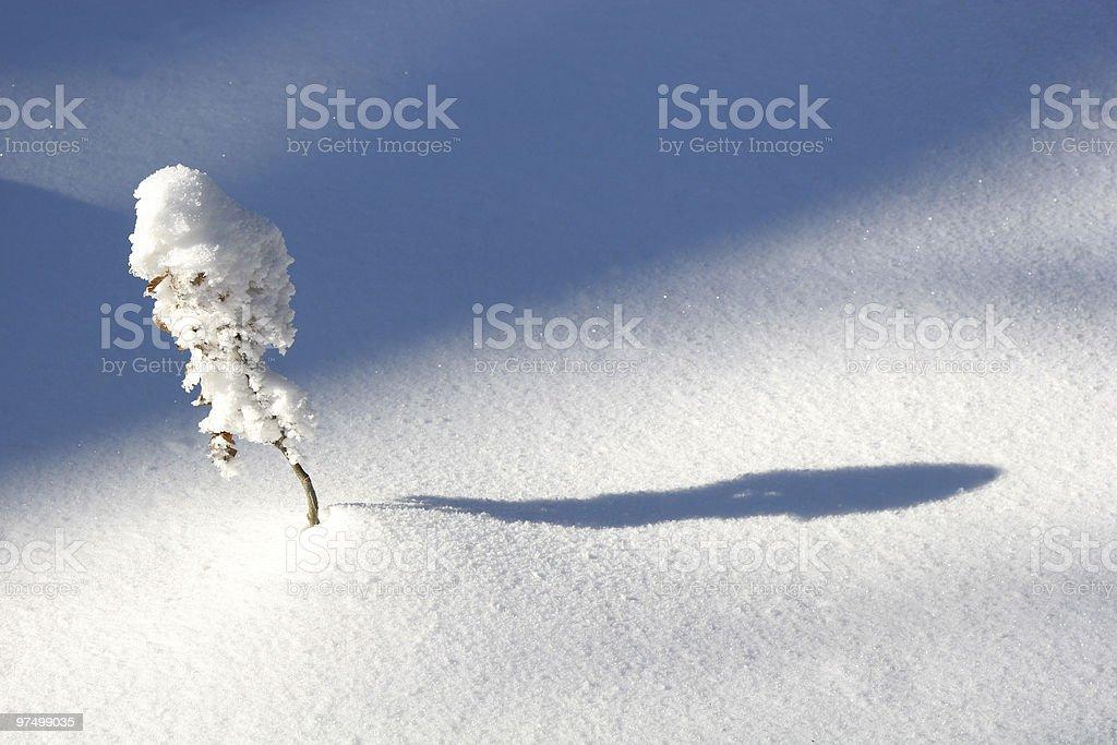 Little snowy tree royalty-free stock photo