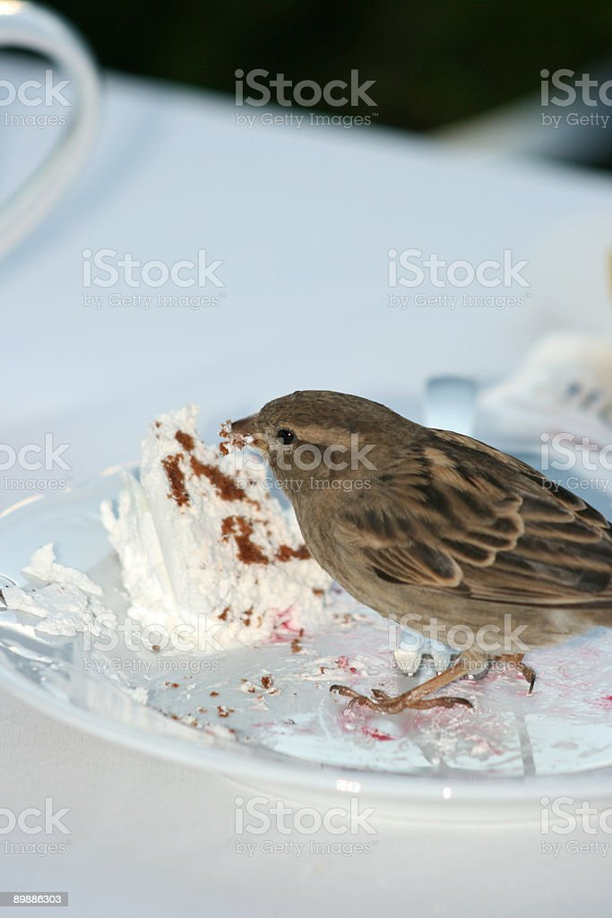 Little sparrow is eating the cake royalty free stockfoto