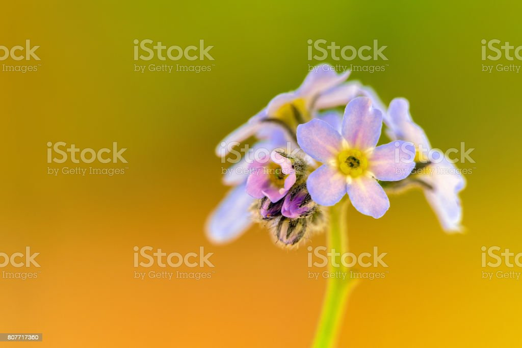 little spring flowers stock photo