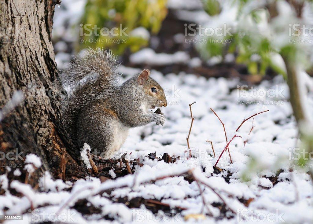 Little Squirrel stock photo