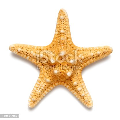 istock Little starfish yellow color isolated on white background. 938387360