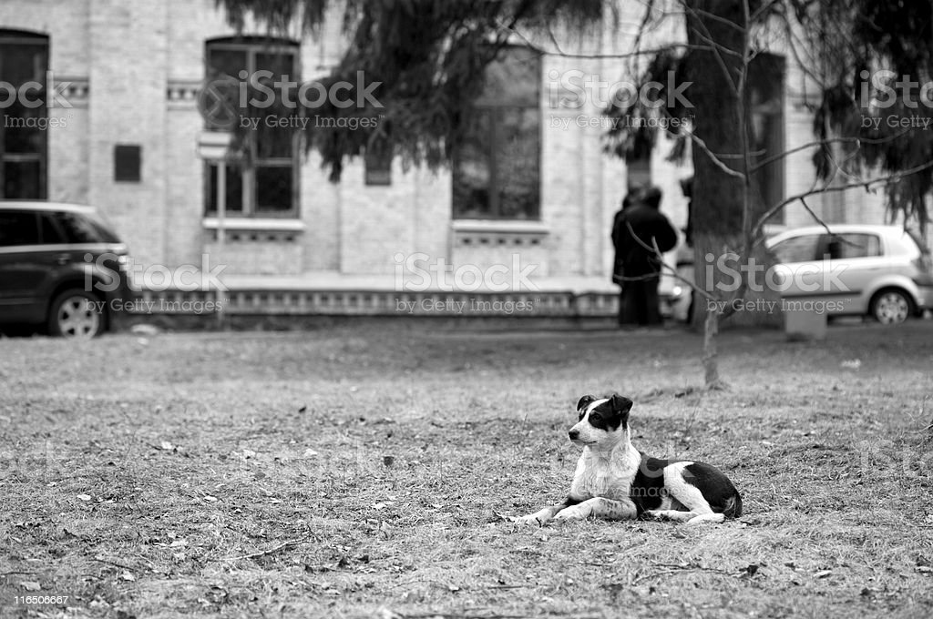 Little stray pup in the city, monochrome royalty-free stock photo