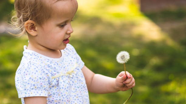 Little toddler blowing dandelion in the park. Happy girl blowing dandelion outdoors in spring park. Sunset and spring concept young girl blowing dandelion. Family and freedom concept. Pun in the park. Child blowing dandelion seeds fly away stock photo