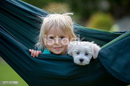 istock Little toddler child, blond boy, playing with little maltese puppy dog in swing 1271127050