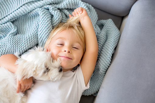 Little toddler child, boy, lying in bed with pet dog, little maltese puppy dog