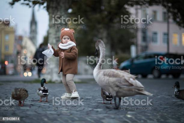 Little toddler girl is chased by a swan for food picture id875409614?b=1&k=6&m=875409614&s=612x612&h=4w2sa2ubob10qisjwfitaraa26krrf3gpkaonpth6le=