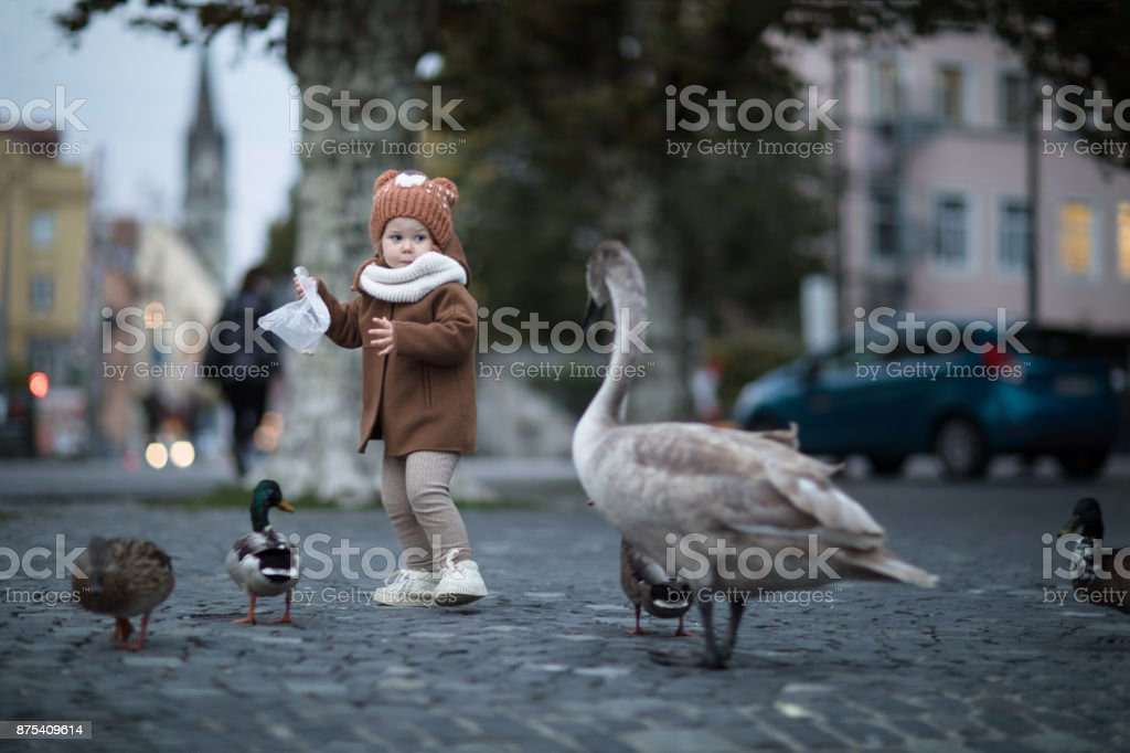 A little toddler girl is chased by a swan for food stock photo
