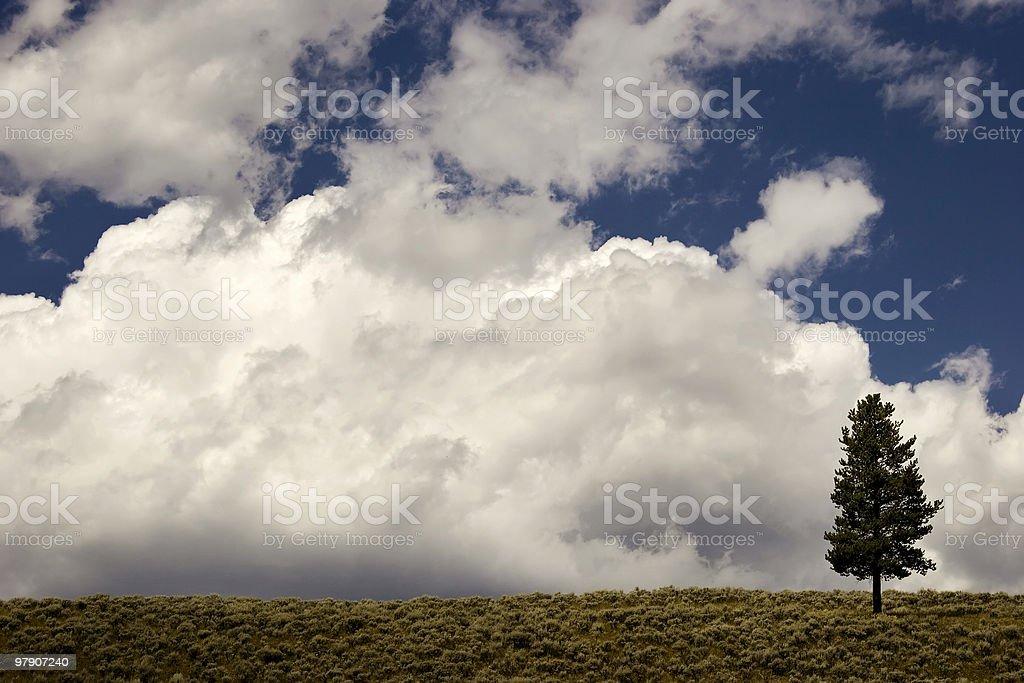 Little Tree, Big Storm royalty-free stock photo